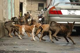 street dof fight